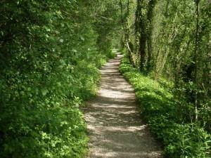 Šumske staze na Jarunu